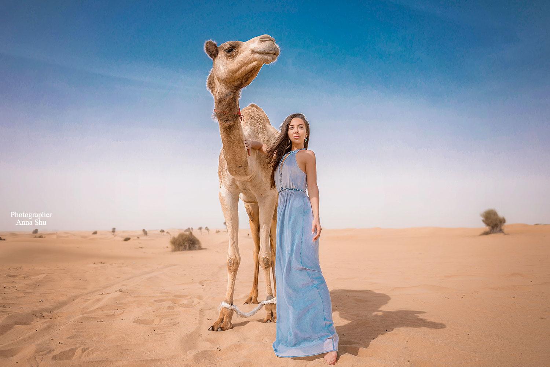 верблюды дубай